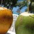 Nos últimos tempos a água de coco deixou de ser só aquela bebida que se encontrava nas praias e ganhou espaço nos mercados e casas de todo o Brasil.Isso porque […]