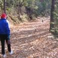 Você sabia que uma leve caminhada pode fazer muito bem? Sabia que caminhadas ajudam a emagrecer mais rápido, nos deixa com sensação de estômago cheio por mais tempo, deixa nossas […]